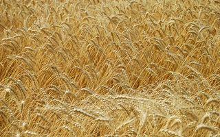Бесплатные фото зерно,поле,трава,разное