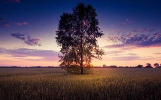 Бесплатные фото дерево,поле,трава,небо,потрясающий пейзаж