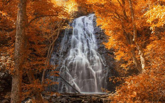 Фото бесплатно осенний водопад, листопад, деревья
