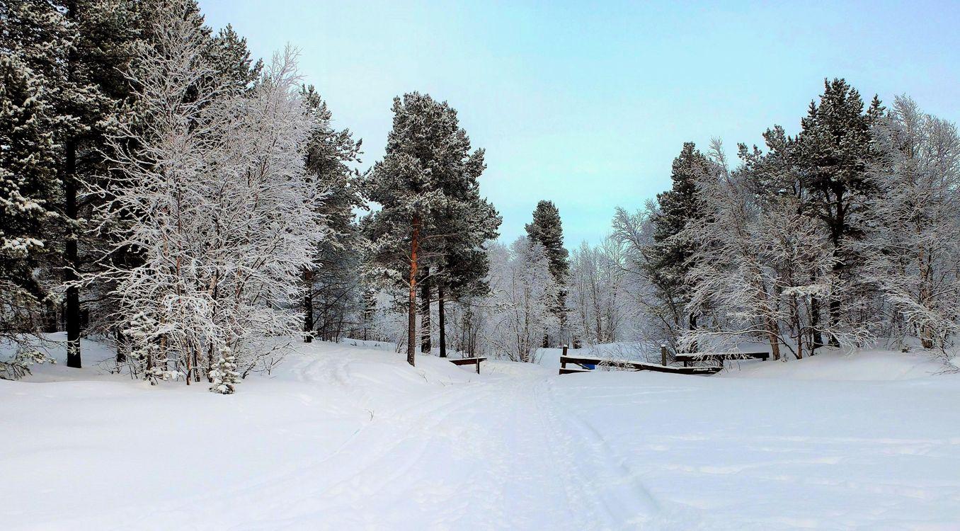 Фото бесплатно зима, лес, деревья, сугробы, дорога, пейзаж, пейзажи