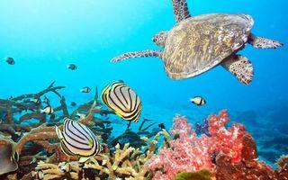 Бесплатные фото рыбки,плавники,окрас,черепаха,панцирь,ласты,кораллы