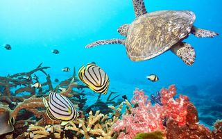 Фото бесплатно рыбки, плавники, окрас, черепаха, панцирь, ласты, кораллы, дно