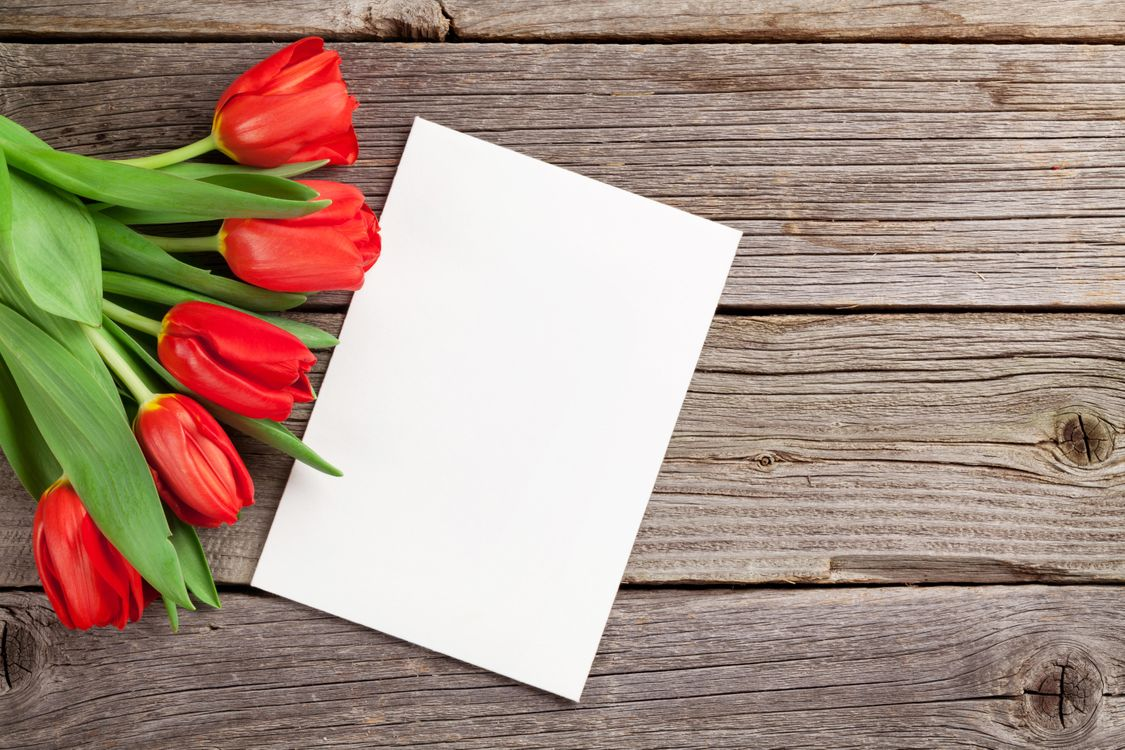Фото бесплатно цветы, тюльпаны, флора - на рабочий стол