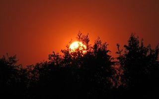 Бесплатные фото вечер,деревья,ветви,солнце,закат,красный