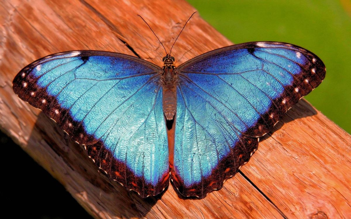 Фото бесплатно бабочка, крылья, бревно - на рабочий стол