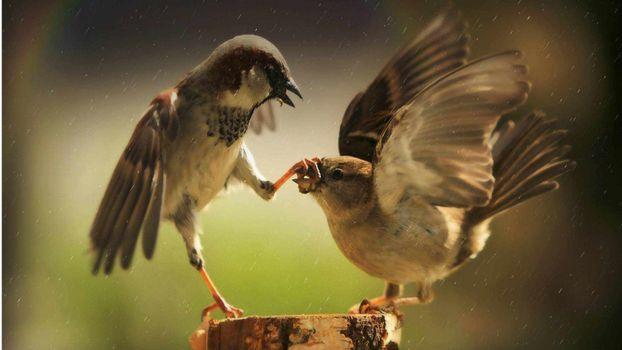 Photo free a sparrow, a beak, a silence