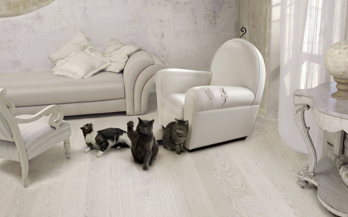 Фото бесплатно комната, мебель, кошки, морды, лапы, кошки