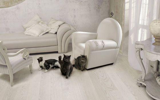 Бесплатные фото комната,мебель,кошки,морды,лапы