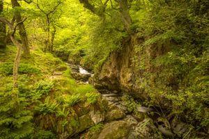 Бесплатные фото лес,деревья,речка,скалы,пейзаж