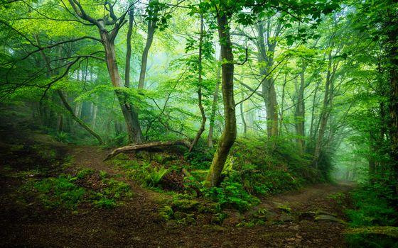 Фото бесплатно Мэтлок, Великобритания, лес