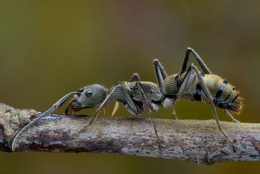 Самые красивые фото насекомое, макро