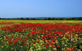 Фото бесплатно разное, поле, цветы