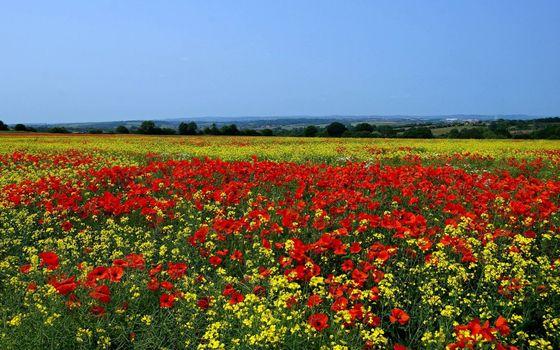 Бесплатные фото поле,цветы,маки,разные,деревья,небо