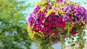 Бесплатные фото клумба,дизайн,композиция,лепестки,разноцветные,листья