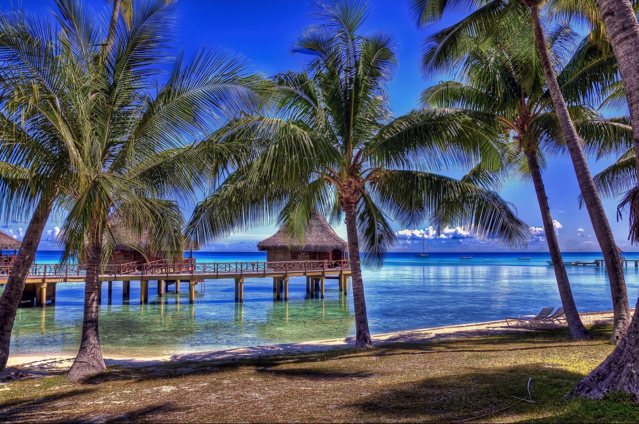 обои на рабочий стол океан пляж пальмы 10206