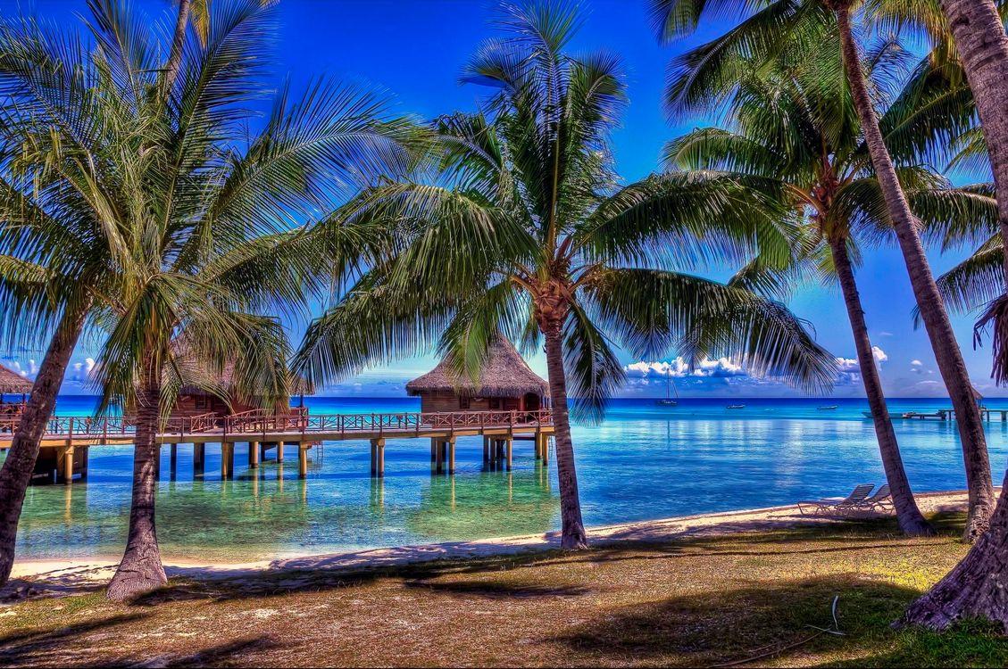 Фото бесплатно Rangiroa, French Polynesia, Французская Полинезия, океан, пальмы, бунгало пляж, пейзаж, пейзажи