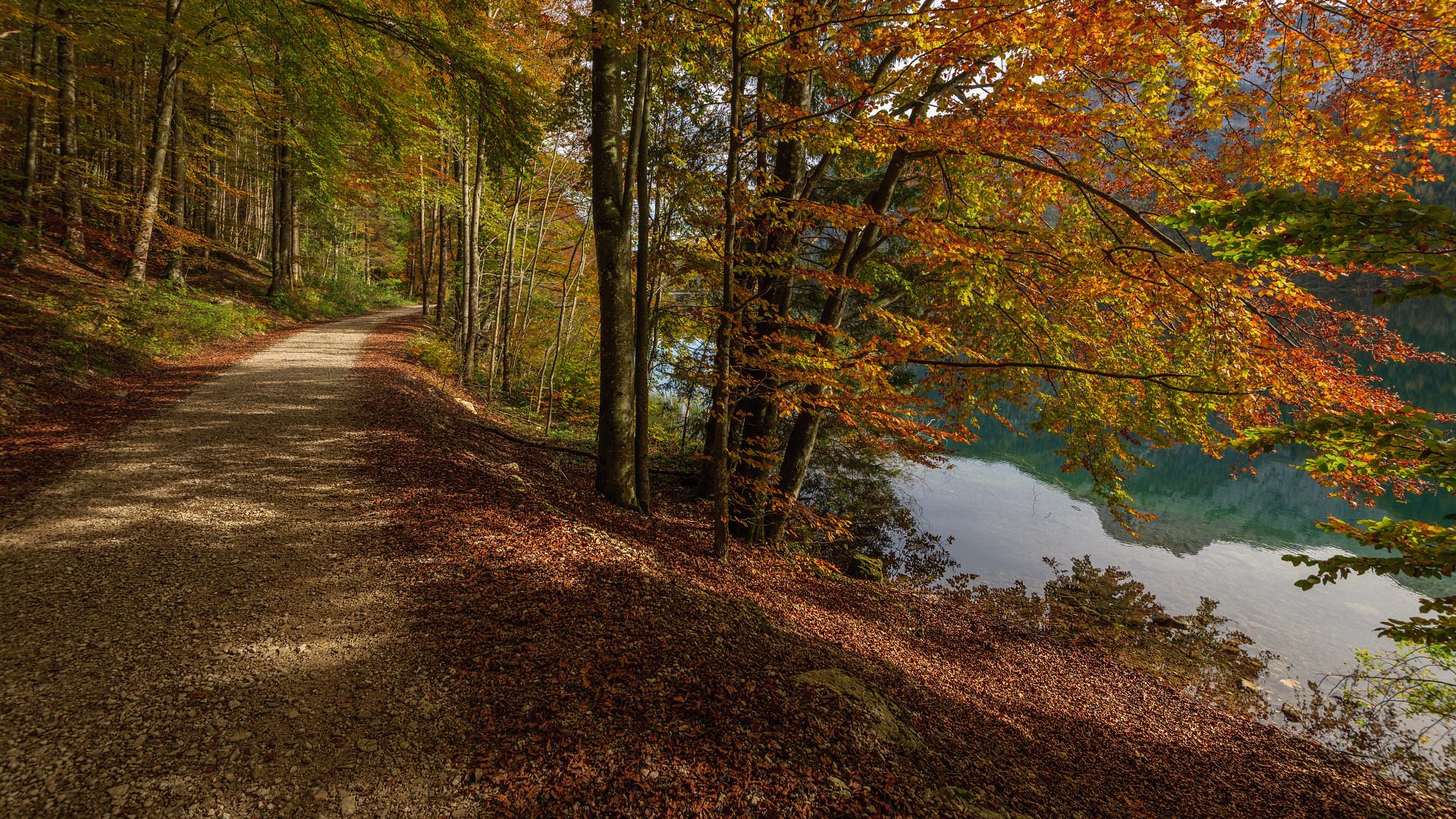 обои Австрия, Шладминг, лес, осень картинки фото
