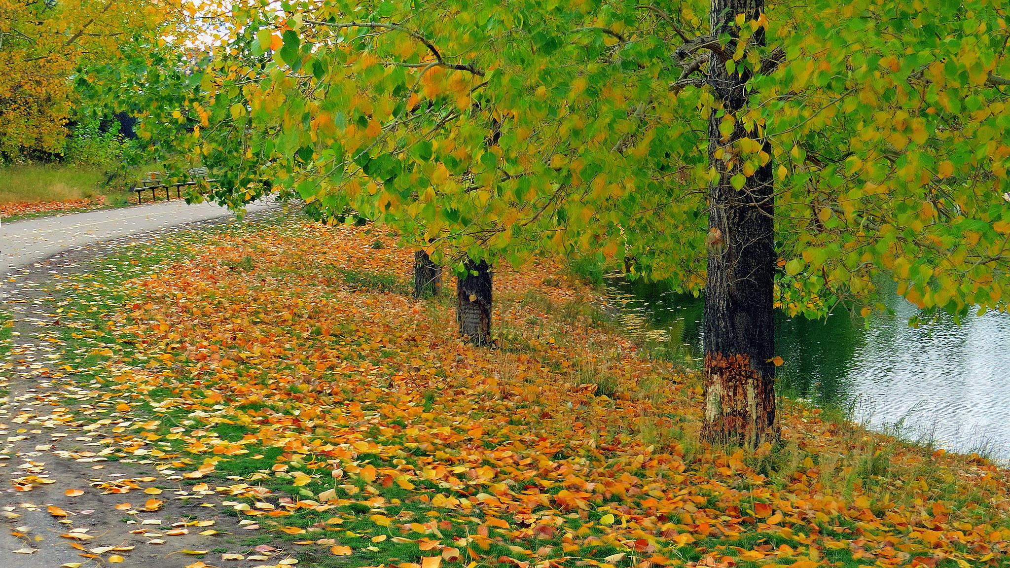 обои осень, река, дорога, деревья картинки фото