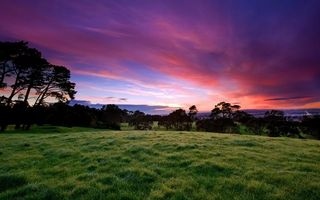 Заставки трава, зеленая, деревья, небо, закат, облака