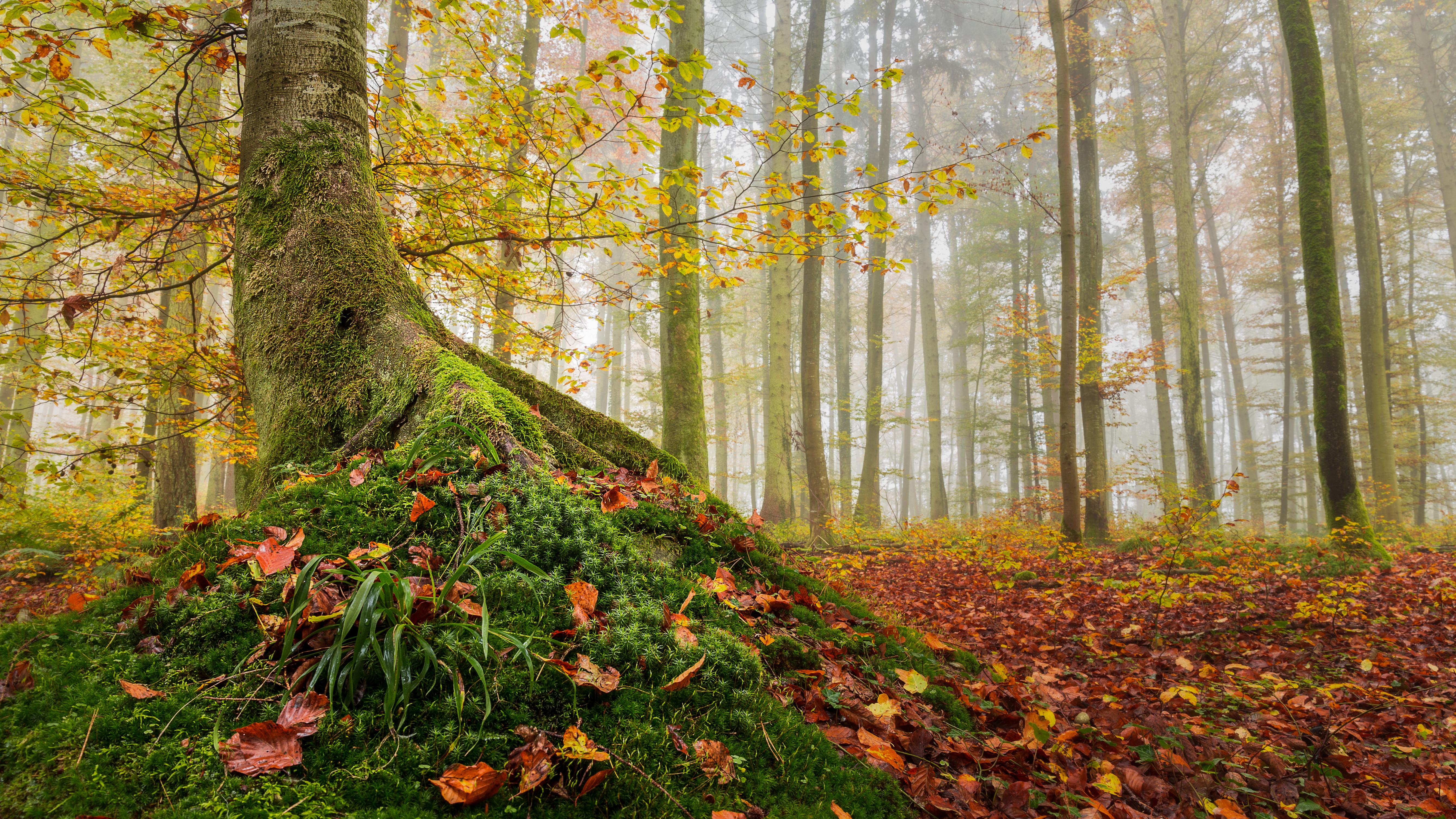 обои осень, лес, деревья, туман картинки фото