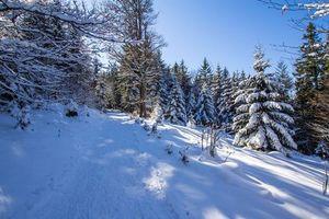 Бесплатные фото зима, лес, дорога, деревья, пейзаж