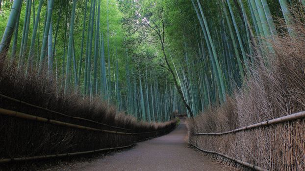 Photo free Kyoto, Japan, bamboo forest