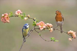 Бесплатные фото птицы,ветка,синица,зарянка