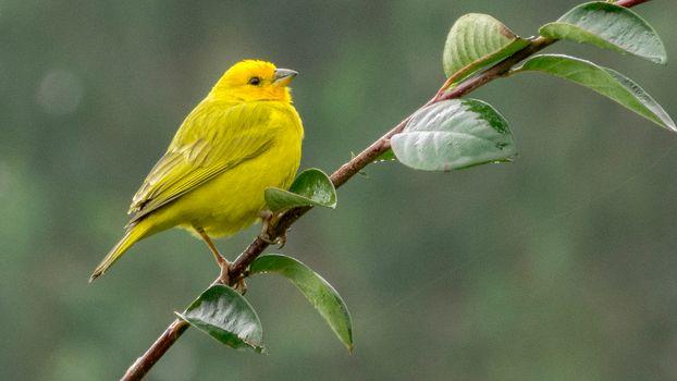 Фото бесплатно птица, ветка, золотой щегол