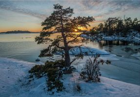 Бесплатные фото морской пейзаж,Швеция,зима,морской лед,лебеди,вечер,закат