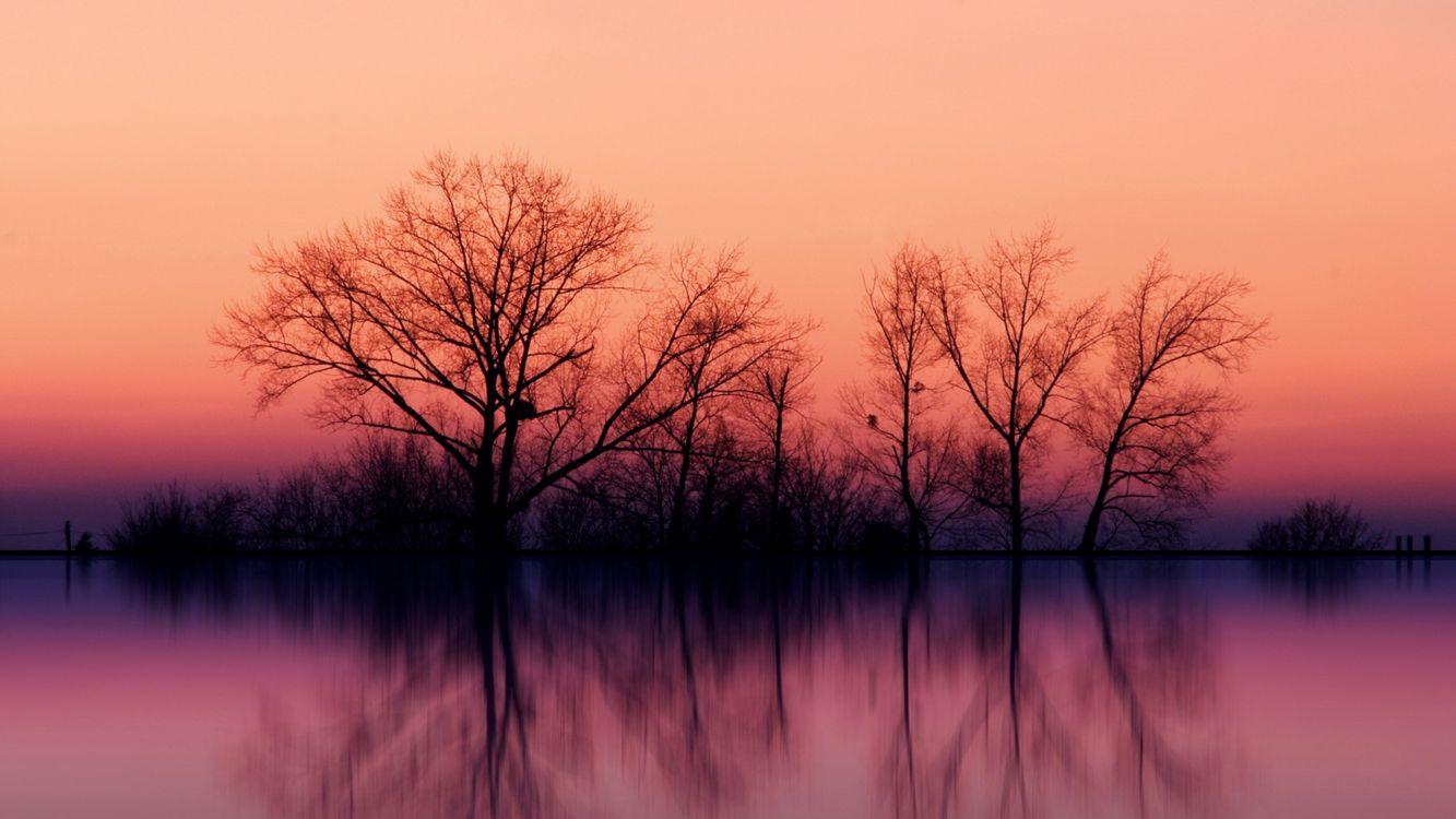 Фото бесплатно вечер, озеро, гладь, отражение, деревья, кустарник, небо, природа - скачать на рабочий стол