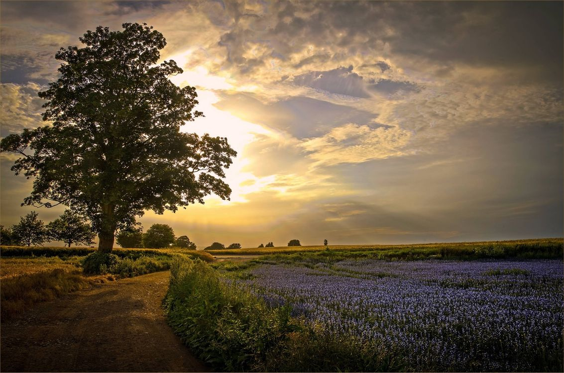 Фото бесплатно закат, поле, дорога, деревья, пейзаж, пейзажи
