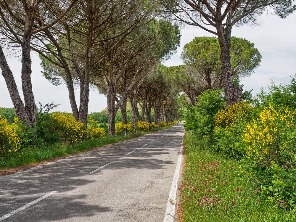 Фото бесплатно дорога, деревья, цветы, пейзаж, пейзажи