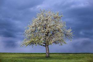 Фото бесплатно поле, тучи, дерево