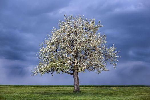 Бесплатные фото поле,тучи,дерево,цветение,пейзаж