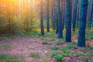 Бесплатные фото лес,деревья,закат,природа