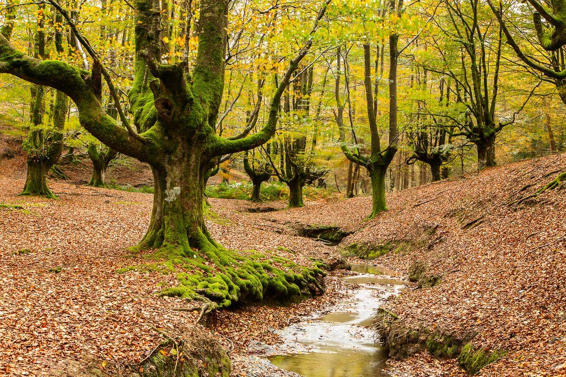 Фото бесплатно осень, Otzarreta, пейзаж - на рабочий стол