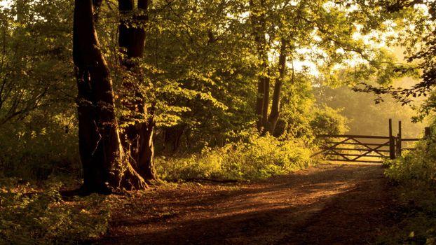 Фото бесплатно лесная дорожка, забор, деревья