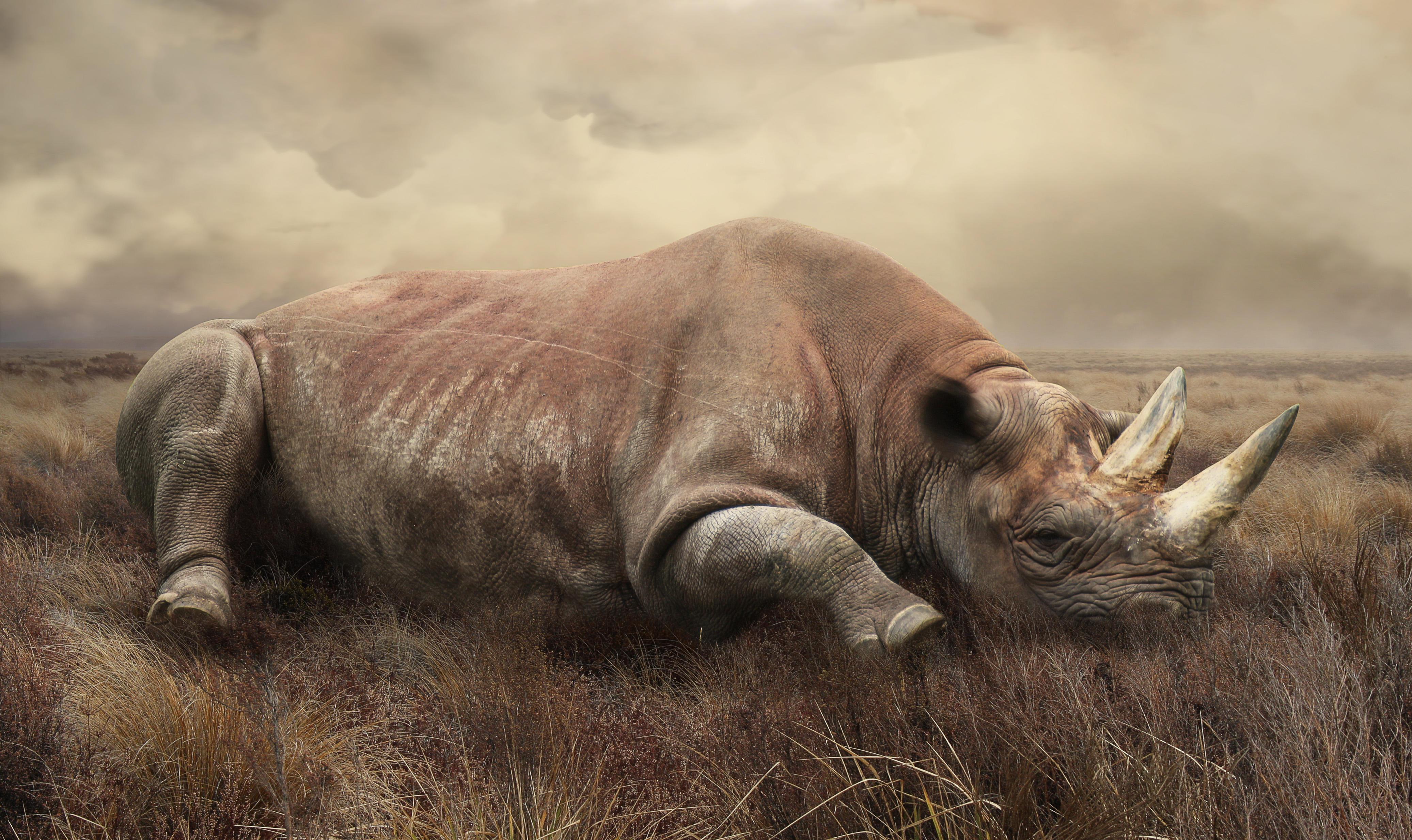 Обои поле, носорог, art