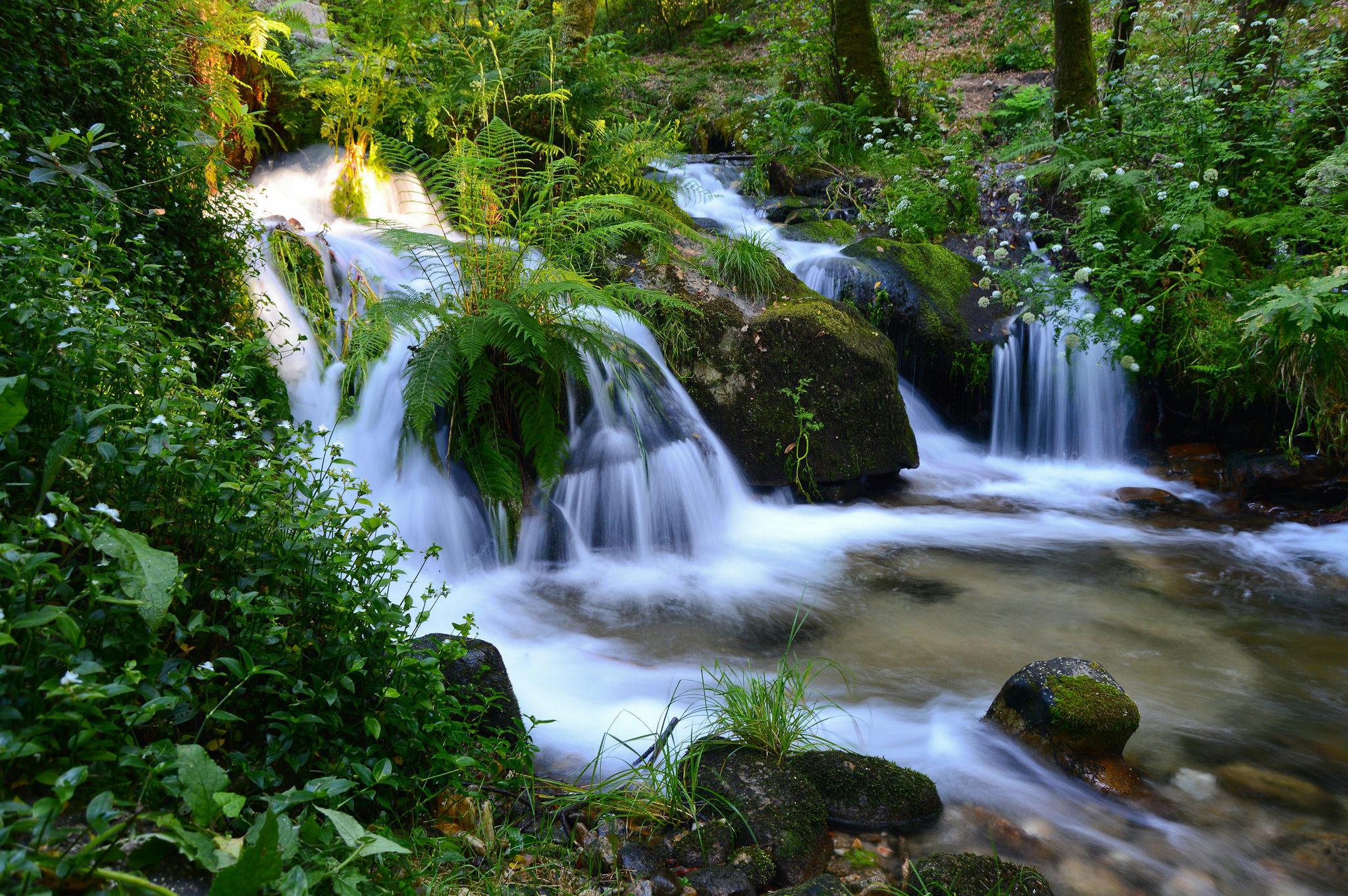 Обои речка, река, водопад, растения