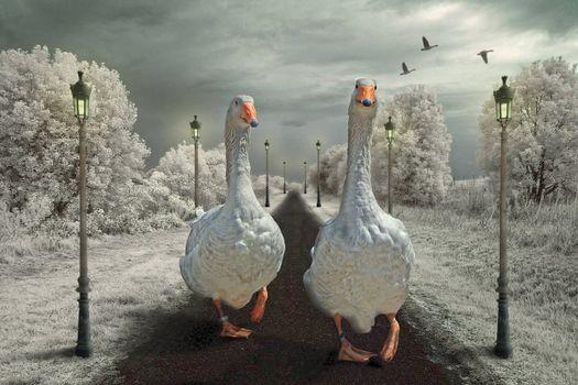 Фото бесплатно дорога, фонари, гуси