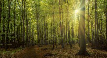 Заставки лес, дорога, деревья
