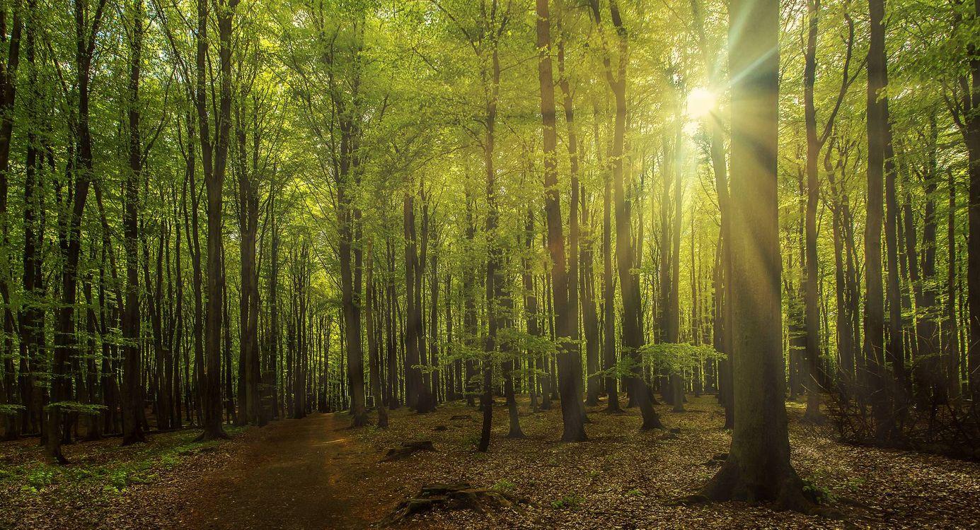 Фото бесплатно лес, дорога, деревья - на рабочий стол