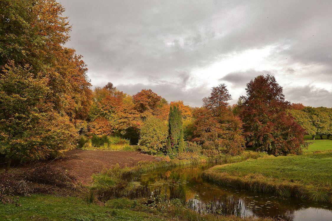 Free photo autumn, forest, park - to desktop