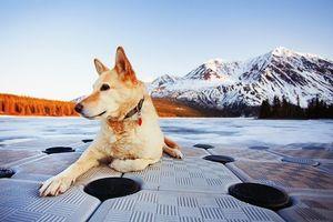 Бесплатные фото собака,природа,горы,осенний день,холмы,ошейник,брелок