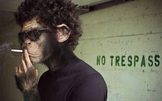 Фото бесплатно человек, голова, обезьяны