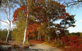 Фото бесплатно осень, тропинка, тропа