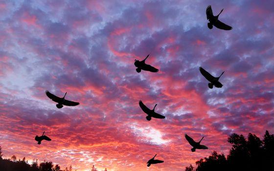 Фото бесплатно аисты, летят, клин