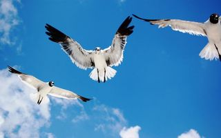 Бесплатные фото чайки,морские,пятна,крылья,небо,облака,солнечный