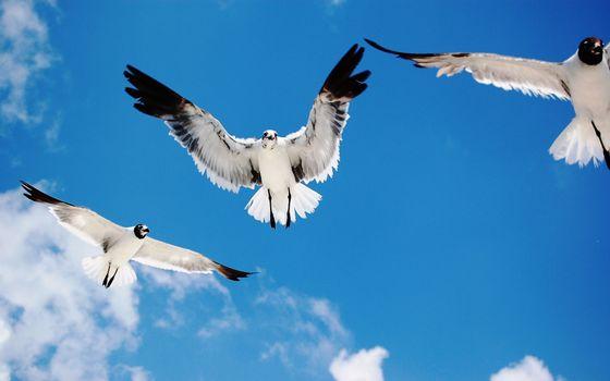 Заставки чайки,морские,пятна,крылья,небо,облака,солнечный,день,птицы