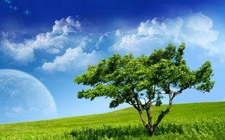 Бесплатные фото дерево,поле,трава,зеленая,небо,голубое,облака